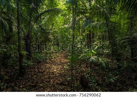 The Amazon rainforest in Manu National Park, Peru #756290062
