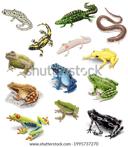 The amphibians. Frogs, toes, newts and salamanders. ストックフォト ©