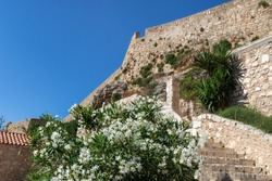 The ancient fortress of Fortezza in Rethymno (Crete, Greece) is located on a high mountain above the sea. In the photo there are ancient walls, flowering shrubs, relict trees, a staircase. Sunny day