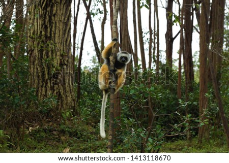 the animal world of Madagascar is unique