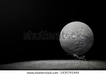 The ants try to lift the round-shaped stone. the ants are carrying the stone. Concept effort and patience, hard work