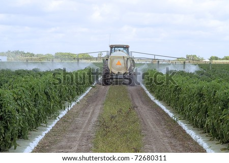 The application of pesticides on a commercial agricultural field with green tomato plants