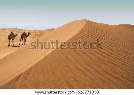 The Arabian desert on a hot sunny day