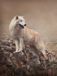 The arctic wolf, also called polar wolf or white wolf, is a mammal of the Canidae family, subspecies of the wolf