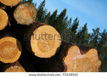 The are some felled trees on a grassland under clear sky