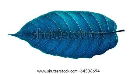 The art blue  leaf isolated on white .