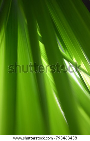 The art of bamboo leaves and papaya leaves - Shutterstock ID 793463458