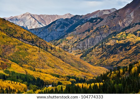The aspen forests above Ouray, Colorado carpet the mountainsides with beautiful autumn color