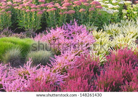 The August garden full of heather, sedum and lush grasses.