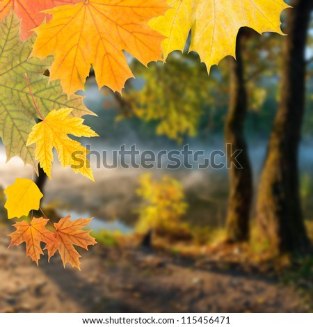 The autumn background with wood and leaves, outdoors, selective focus