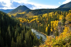 The Autumn colors in the Canadian Rockies in lakes, rivers, valleys, waterfalls and surrounding mountains. A group of horse riders enjoying a day out on a sunny autumn day along aspen grove.
