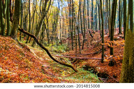 The autumn forest is covered with fallen leaves. Autumn in forest. Forest in autumn. Autumn forest background
