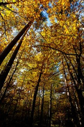 the autumn forest with trees and leaves full of colors