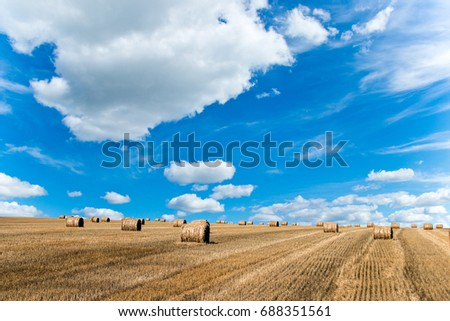The autumn grassland to the blue sky and white clouds