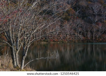 The autumn scenery at the shore of a lake, trees reflected on the surface of the water #1250546425