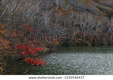 The autumn view at the shore of a lake, ripples on the surface of the water #1250546437