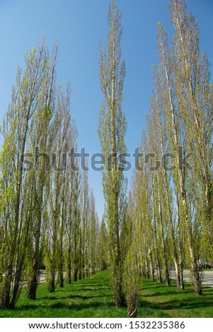 the Avenue of tall tall trees #1532235386