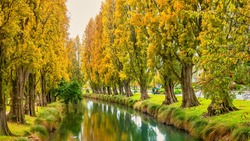 The Avon River in downtown Christchurch, New Zealand, with vibrant autumn foliage on rows of poplar trees which line the riverbank.