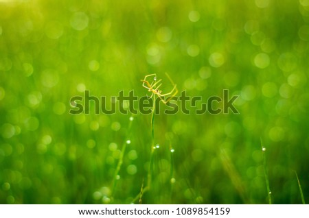 the awesome grass