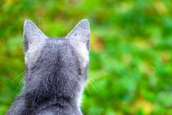 The back of a gray cat's head on a green background.