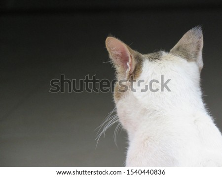 The back of a white cat's head with ears upturned with a black background