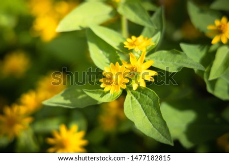 The background image of the colorful flowers, background nature #1477182815