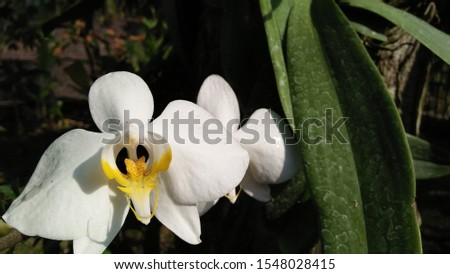 the background of the natural beauty of the flower blooms white flowers bloom beautifully in summer. closeup of tropical plants when blooming with botanical garden petal decorations. #1548028415
