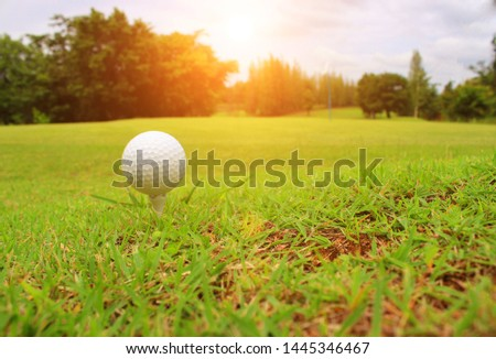 The ball, the ball on the white tee in the lawn, comes in the sunlight.