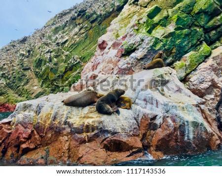 The Ballestas Islands, a reserve full of birds