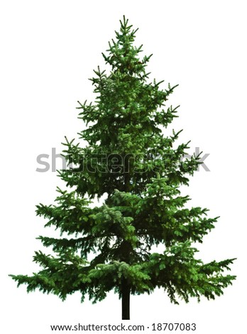 The Bare Christmas tree ready to decorate - stock photo