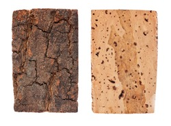 The bark and wood of cork oak, isolated on white