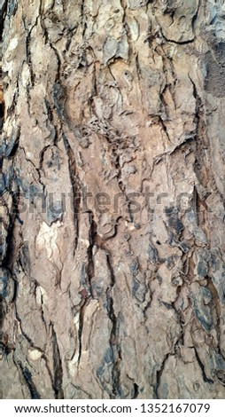 The bark of the trunk #1352167079