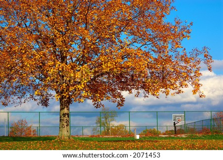 The Basketball Court - A huge tree, with autumn colored leaves looms over the basketball court in October as the sun begins to set.