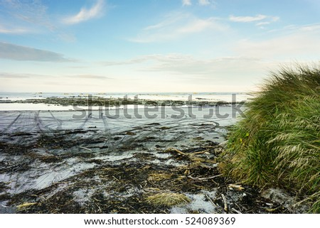 The beach in Ohau Point Seal Colony, Kaikoura, New Zealand