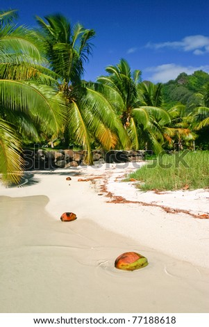 The beach in paradise island Moorea, French Polynesia