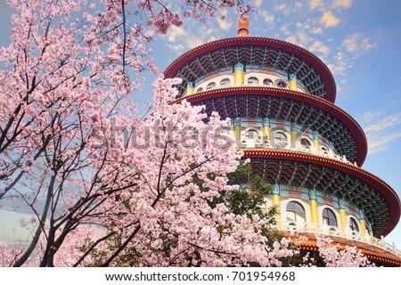 The beautiflu sakura garden with nice sky in Taipei, Taiwan