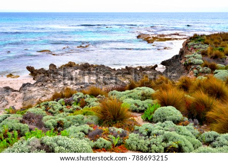 The beautiful and attractive native plants on the rocky beach of the Hanson bay, located on the western end of Kangaroo island, Australia
