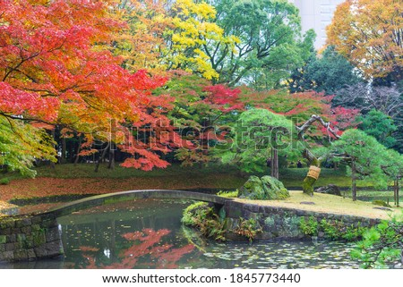 the beautiful autumn color of Japan maple leaves on tree is green, yellow, orange and red discoloration and refletion on water pond in the park, japanese park Foto stock ©