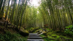 The beautiful bamboo forest at Xitou Nature Education Area (Xitou Forest Recreation Area) in Nantou County, Taiwan.