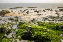 The beautiful beaches of Bali. Waves and sea stones in seaweed. Sandy beaches with unusual stones on the shore.