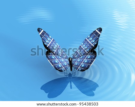 the beautiful butterfly on the water