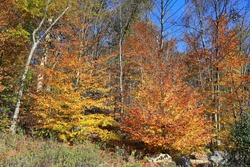 The beautiful colors of the autumn on the Putnam Trailway in upstate New York.