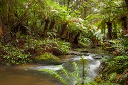 The beautiful creek that feeds Triplet Falls located in the lush rain forest in the Great Otway National Park in South West Victoria, Australia. Tree fern sits on the banks of the creek.