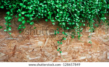 The beautiful decorative plant on the modern wall isolated on wood background