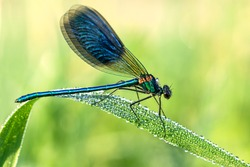 the beautiful dragonfly  on a meadow closeup