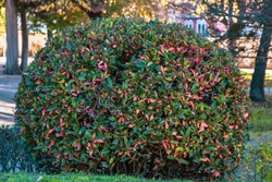 The beautiful gardens trees shrubbery of the Royal Site of La Granja de San Ildefonso