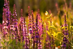 The Beautiful individualistic flower life