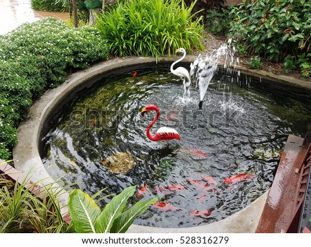 the beautiful Koi pond in the garden
