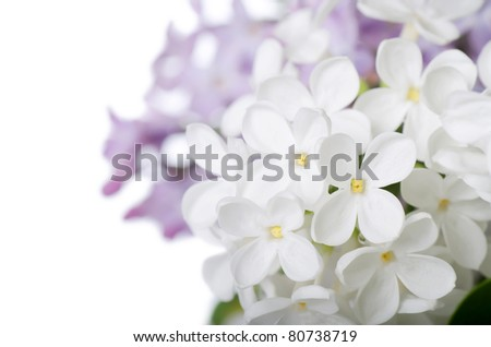 The beautiful lilac isolated on white background