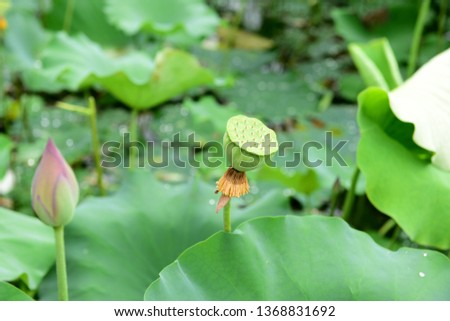 Inside A Lotus Flower Images And Stock Photos Page 4 Avopixcom